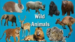 Wild Animals Name In Hindi And English    जानवरों के नाम हिंदी    Digital Smart English Class