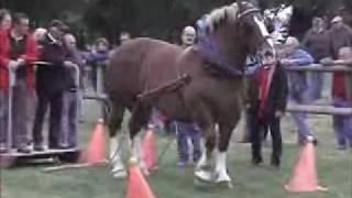 Cavalo Bretão - Prova de Tração - Atrelagem - 1 cavalo