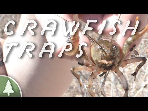Crawfish Trap Comparison & Testing