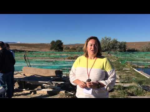 Direct Use Geothermal  Tilapia Fish Farm