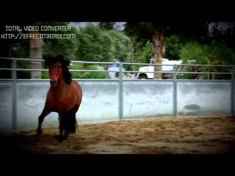 caballos españoles de venta rancho san angel inc .sementales y maquilas