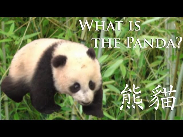 Discovering China - What is the Panda?