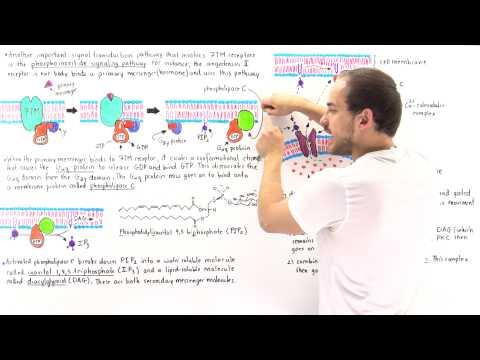 Phosphoinositide Signal Pathway