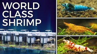 Keeping Award Winning Shrimp — International Shrimp Contest