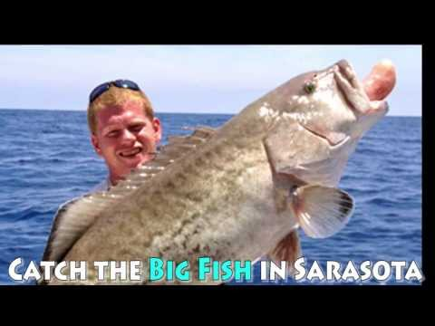 Catch the Big Fish in Sarasota and Start at All About Fishing for Fishing Tips and Fresh Bait in FL