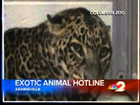 Exotic Animal Hotline Available video