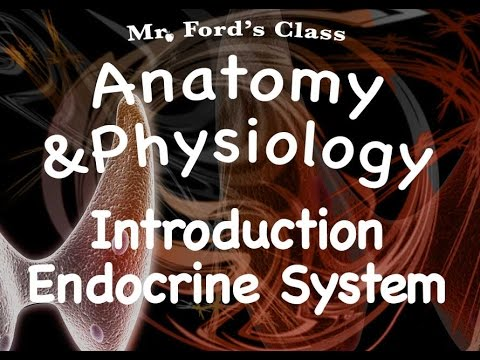 Endocrine System : Introduction to the Endocrine System (12:01)