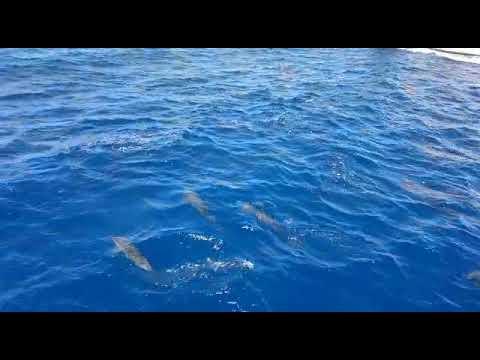 Die schönsten Tiere unterwasser