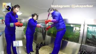 Buy Fresh Fish in North Korea