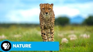 NATURE | Animals with Cameras, Episode 2: Official Trailer | PBS