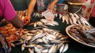 Ramadan Fish Market 2017   Amazing Muslim Bazar Fish Market Dhaka Bangladesh   YouTube HD