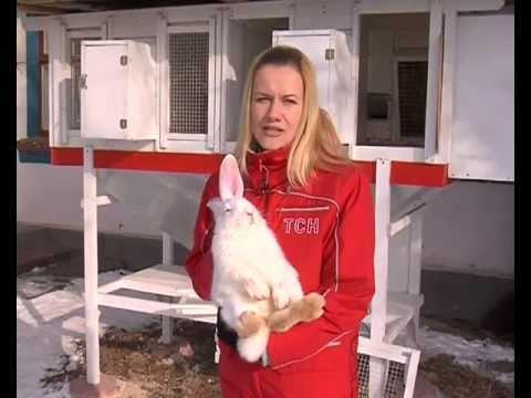 другой Как построить бизнес с нуля кролик они