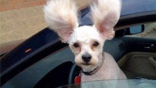 EXTREMELY HARD TRY NOT TO LAUGH CHALLENGE - FUNNY Dog Videos