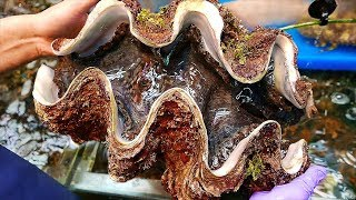Japanese Street Food - $100 GIANT CLAM Seafood Japan