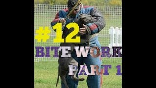 beginning of bite work hybrid pit bull shepherd training attack protection dog trained