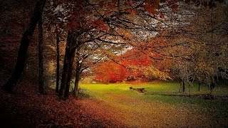 Beautiful Autumn Music - October