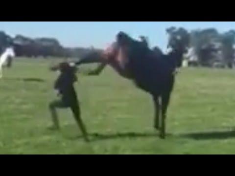 Girl Horses Horse Kicks Girl in Head