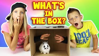 What's in the Box Challenge!!!!!