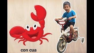 Bé Bo Chơi Trò Chơi Ghép Hình Con Cua - Animal Names Puzzle Crab  - BVA TV