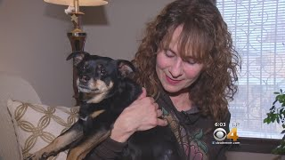 Dog Owner Warns People Of Coyote Attacking Her Dog