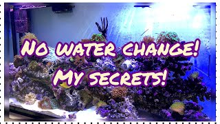No Water Changes!! My reefing Secrets!🐠🖤