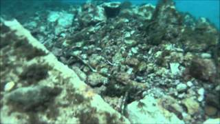 Sailing Croatia - Komiza - Underwater movie (2013.10.09)