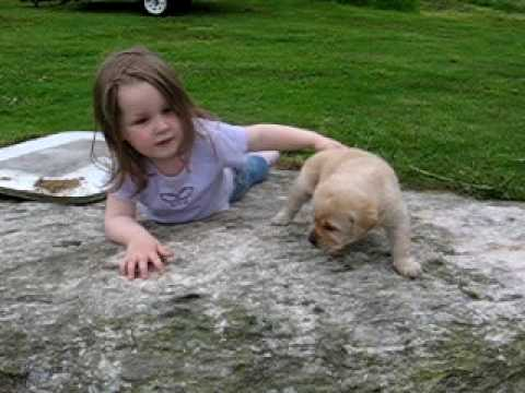 cute yellow labrador puppy. Cute Yellow Lab Puppy Molly. Cute Yellow Lab Puppy Molly. 0:25. my daughter meets our new puppy Molly for the first time.