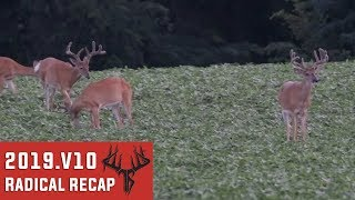Velvet Scouting & Food Plots - Radical Recap 2019.V10