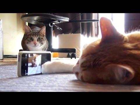 3匹の猫ちゃん達がスマホ...