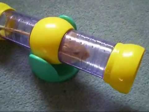 Gerbil agility gone wrong!
