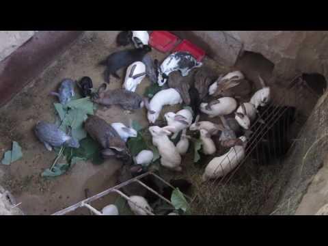Кролики в яме 2016 июнь 28 ЛИЧНЫЙ ОПЫТ!!!