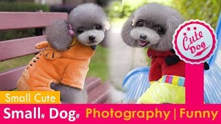 Cute Dogs and Cats Doing Funny Things 2018♥ #82 - CuteVN