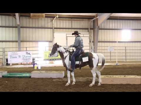 Camden - 2014 Indoor Trail Obstacle Course - SSHBEA Sport Horse Championship