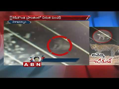 CCTV Footage | Cheetah Wandering in Vishaka