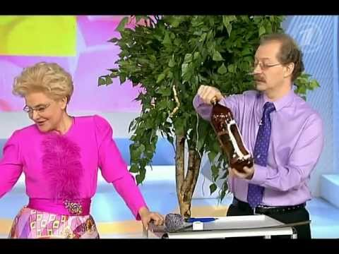 Кормушка для кур из бутылки своими руками