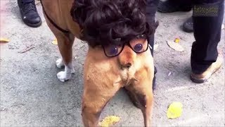 ► Funny Dog Compilation 🐶#8   ★ Try Not to Laugh Animals Clean ★ While Animals Are Idiots 💗😂 !!