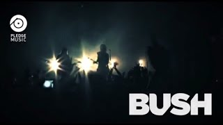 Video-BUSH - Pre-Order the New Album on PledgeMusic