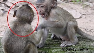 Pity to this baby monkey cuz have a lot of ants on his body, Sweet Pea try to play with him