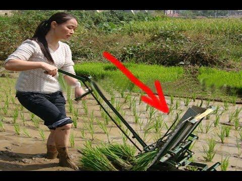 Unik Cara Petani Menanam Padi Di Jepang