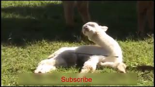 Funny clip   vip funny videos 2016