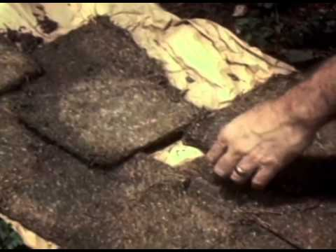 CIA Involvement in Bob Marley's Assassination Attempt