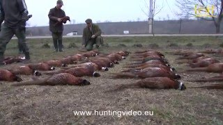 Pheasant Hunting In Hungary Pélpuszta (HD).mpg