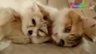 Смешные милые животные .
