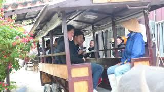 ロッテ新人8人が竹冨島で水牛車堪能