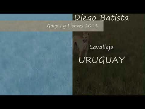Galgos y Liebres 2011 Parte 1