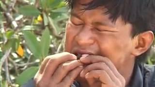 Jejak Petualang Survival - Penghuni Ekosistem Rawa