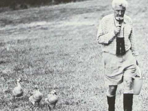 Konrad Lorenz på promenad med präglade gäss.