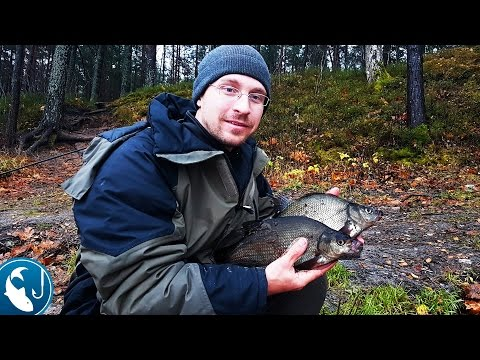 Ловля леща на реке в ноябре на #фидер. ловля на фидер осенью | Рыбалка с Родионом