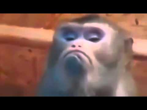 New Funny Video 2015 Angry Monkey Face Youtube