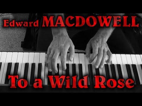 Эдуард Мак-Доуэлл - To A Wild Rose